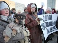 Защита животных в Архангельске