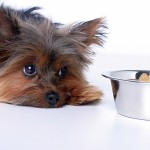 как ухаживать за собакой и кормить