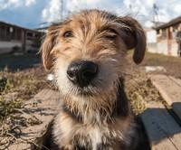 Приют для животных, Пушкино