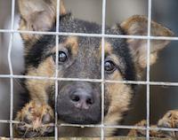 Приют для бездомных животных в Сасове