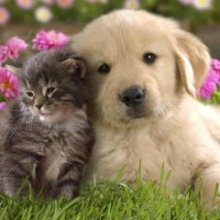 Собаки не дружат с котами?