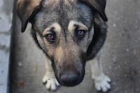 Помощь бездомным животным Екатеринбурга