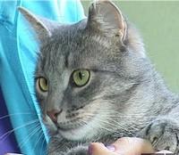 Помощь бездомным животным в Нижнекамске