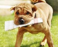 Сбор макулатуры в помощь собакам