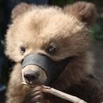 Фотобизнес с животными