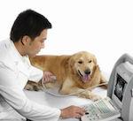 Болезни суставов собак