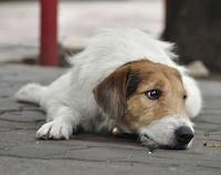Приют для животных в Улан-Удэ
