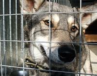 Приют для бездомных животных на Камчатке