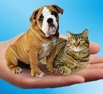 Помощь бездомным животным в Новополоцке