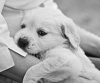 Помощь животным в Ярославле