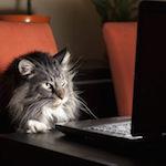 Кот на работе