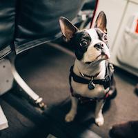 Питомец в самолете