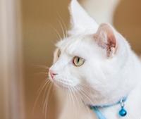 Приют для кошек в Перми