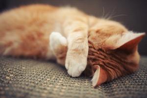 Как избавиться от запаха кошки