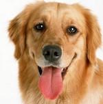Собаки умеют смеяться