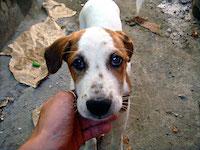 Помощь бездомным животным в Севастополе
