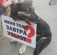 Зоозащитный митинг в Красноярске