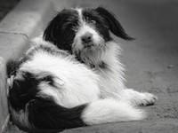Приют для бездомных животных в Туле