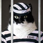 Кот контрабандист