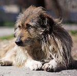 Эпидемия бешенства в Киеве