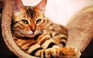 Старость кошки