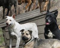 Приют для животных в Узбекистане