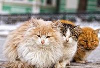 Помощь бездомным животным в Саратове