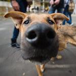 Бездомные собаки Ульяновска помогли полиции