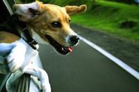 Автопробег в защиту животных