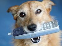 Позвони собаке