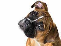 Помощь потерявшимся животным в Иваново