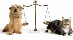 Российский закон о животных