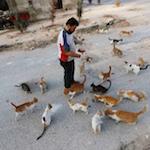 Кошки в Алеппо
