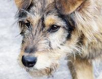 Помощь бездомным животным в Бийске