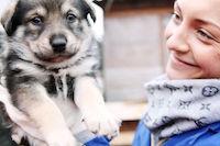 Выставка-раздача животных в Белгороде