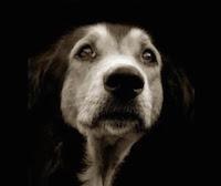 Помощь бездомным животным в Благовещенске