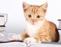 Читаем кошке