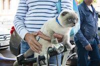 День Петербургских кошек