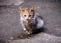 День бездомных животных