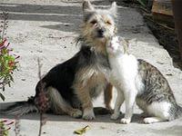 Приют для бездомных животных в Канске