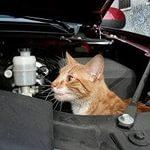 Lada Kalina не будет переделана из-за кошек