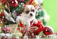 Питомец на Рождество