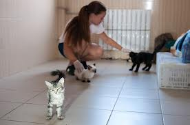 Волонтер в приюте для животных