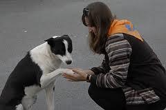 Как пристроить собаку