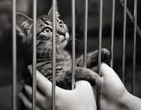 Помощь животным в Мурманске