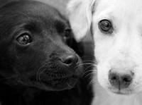 Помощь животным в Туле