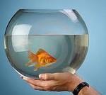 Круглый аквариум под запретом