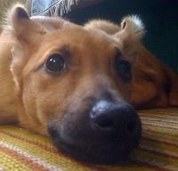 Помощь животным в Кирове