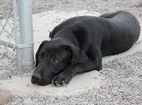 Помощь животным во Владивостоке
