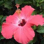 Цветение растений